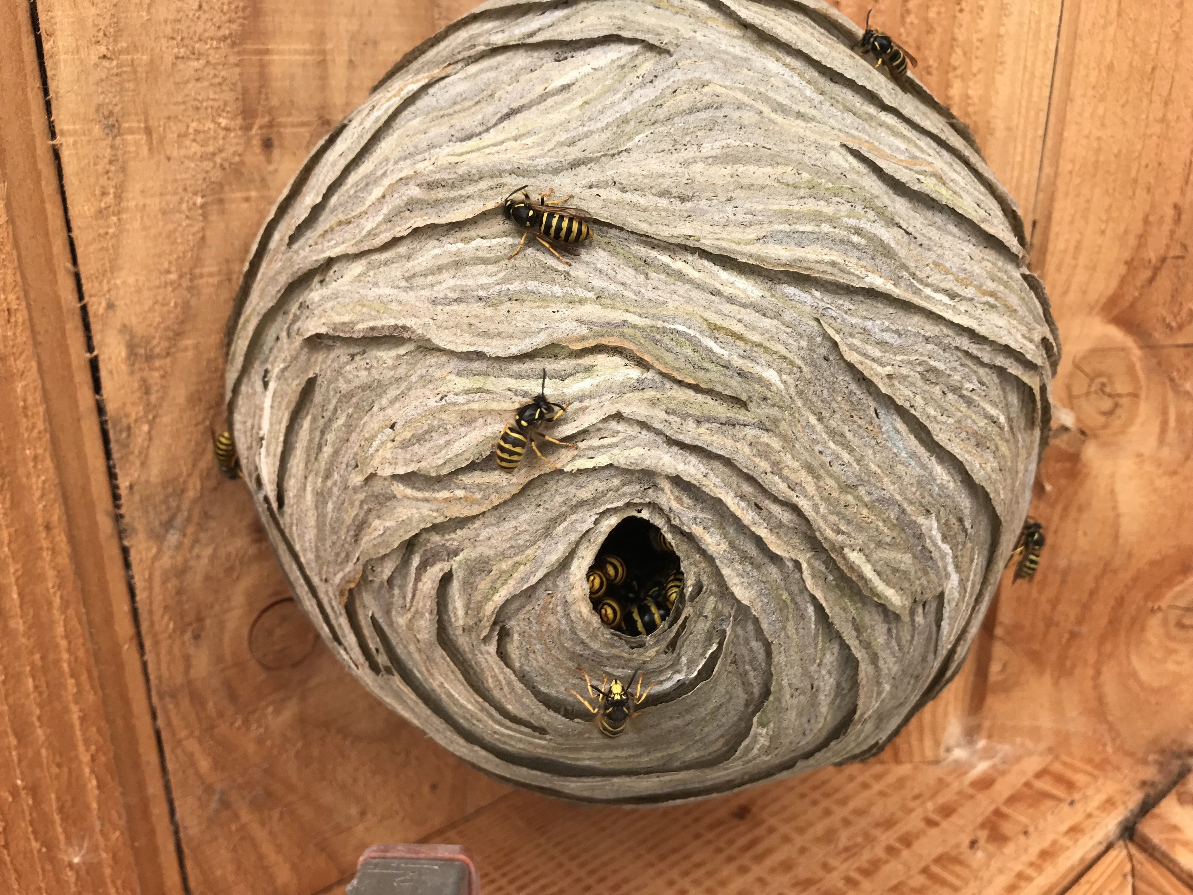 Wasp nest removal Leeds
