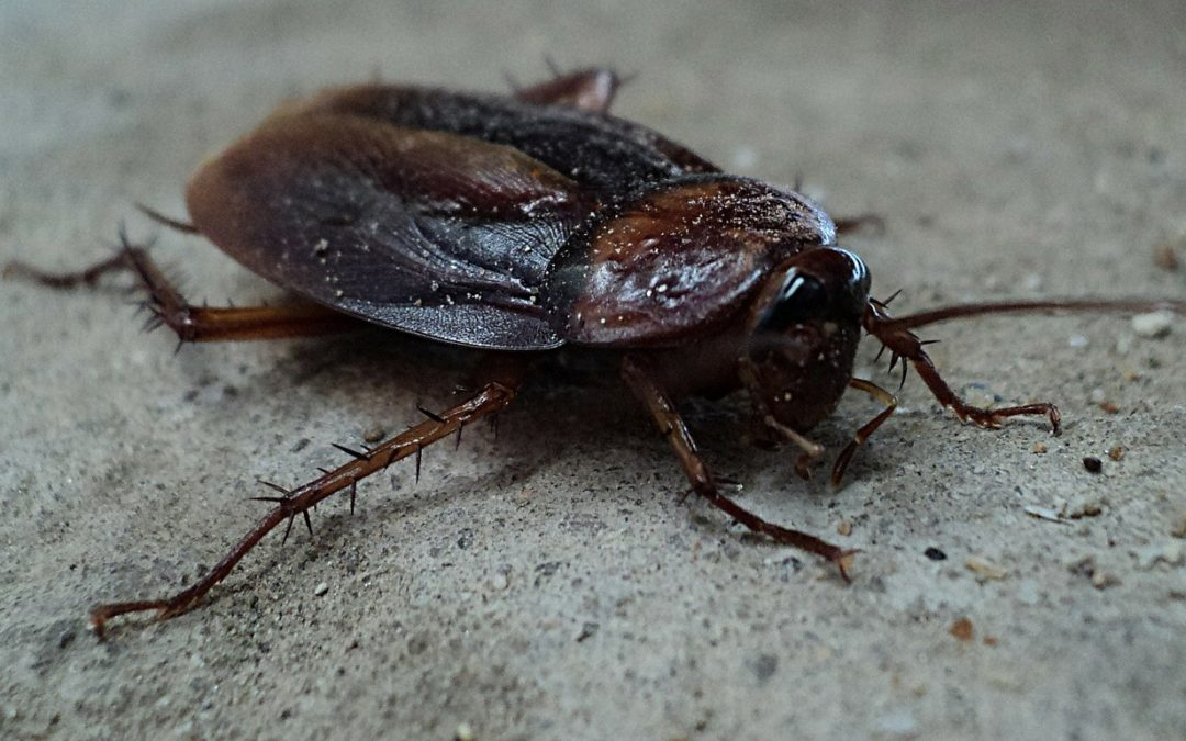 3 Tips for Getting Rid of Cockroaches in Your Restaurant – Our Guide
