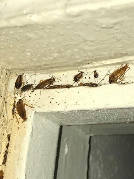 Cockroach control in leeds