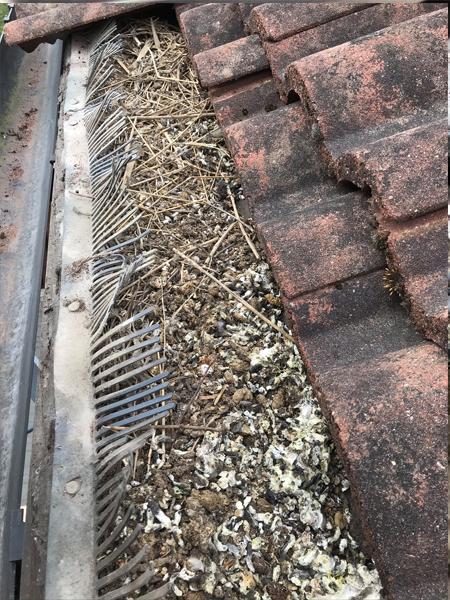 Pigeons roof leeds