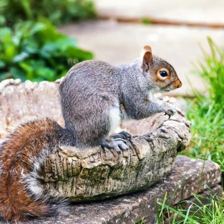 grey squirrel leeds