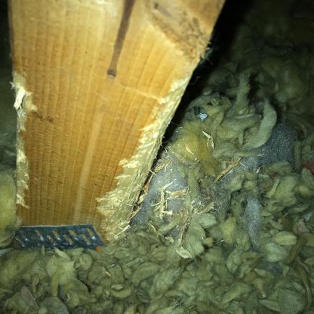 squirrel-vermin leeds