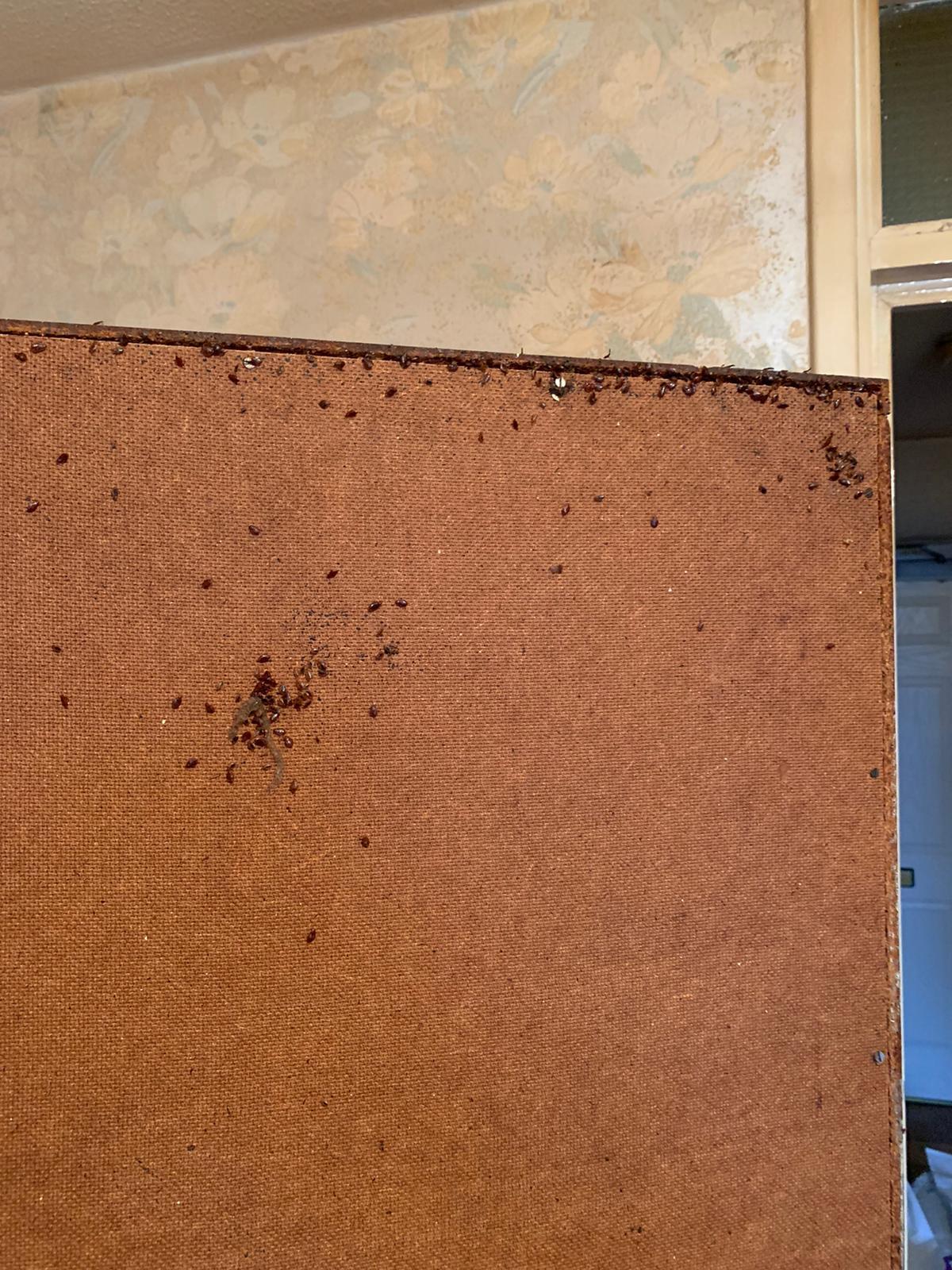 Bedbugs in leeds