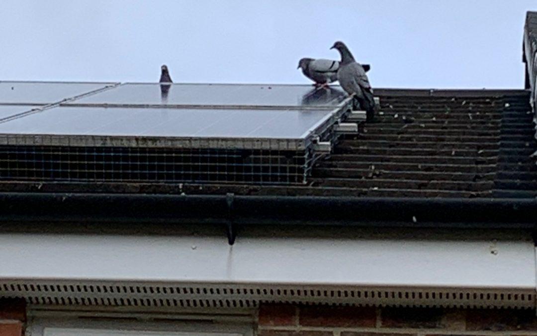 Solar Panel Pigeon Proofing Leeds