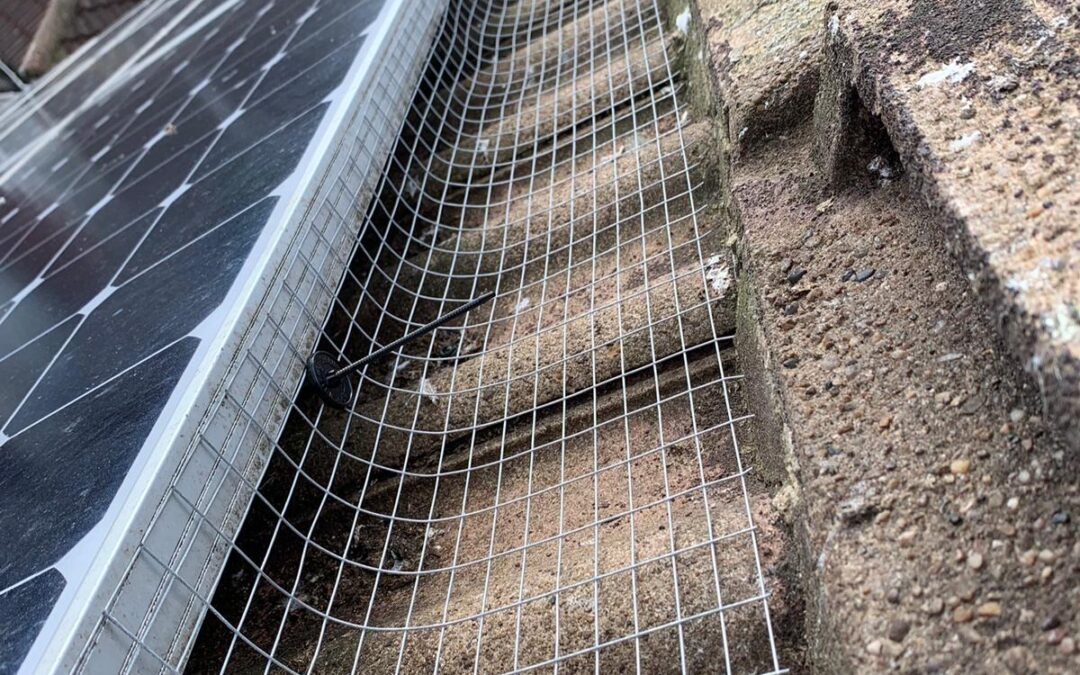 Solar Panel Pigeon Proofing in Harrogate