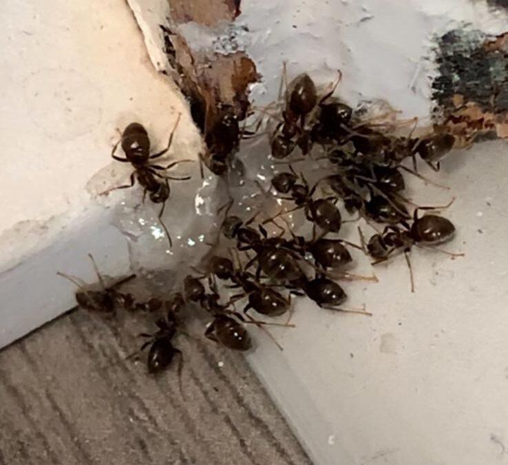Ant Control Leeds