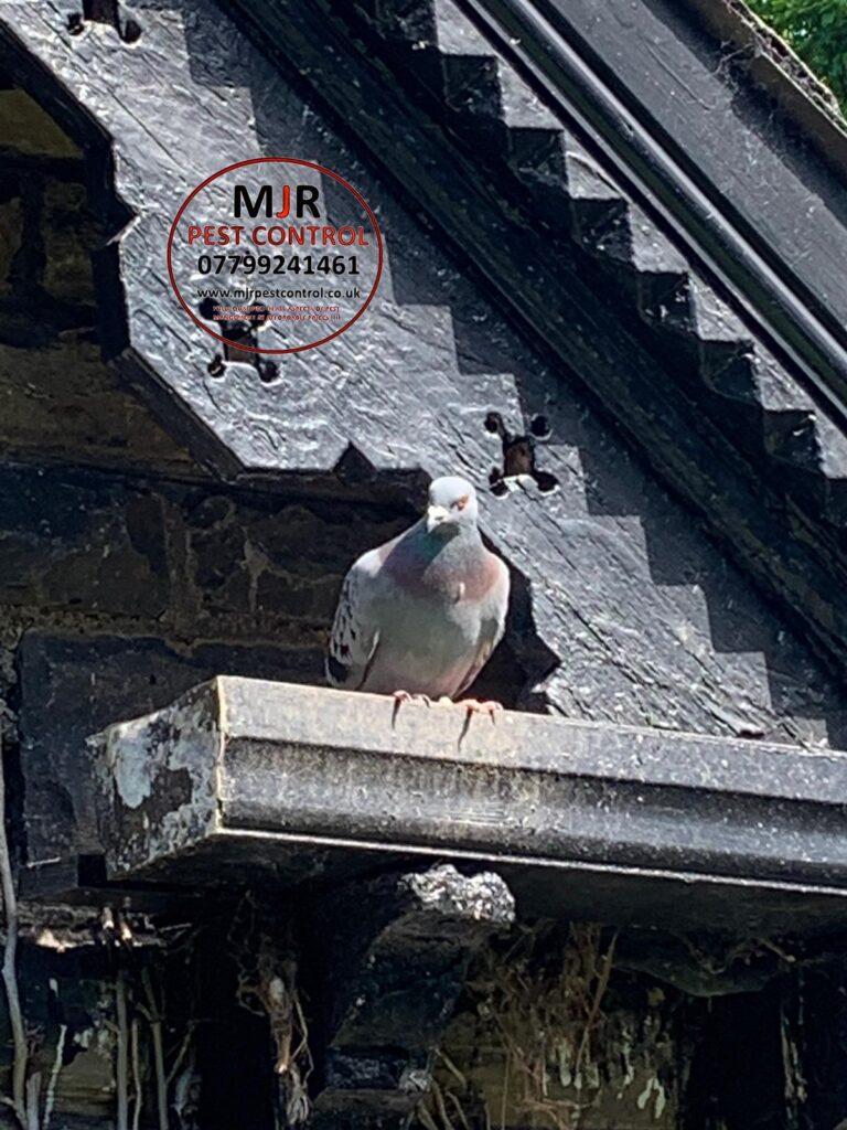 pigeon proofing leeds