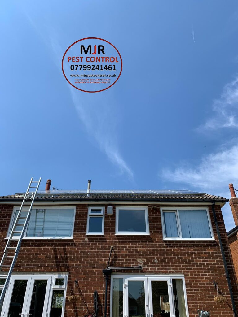 Solar panel pigeon proofing in Otley