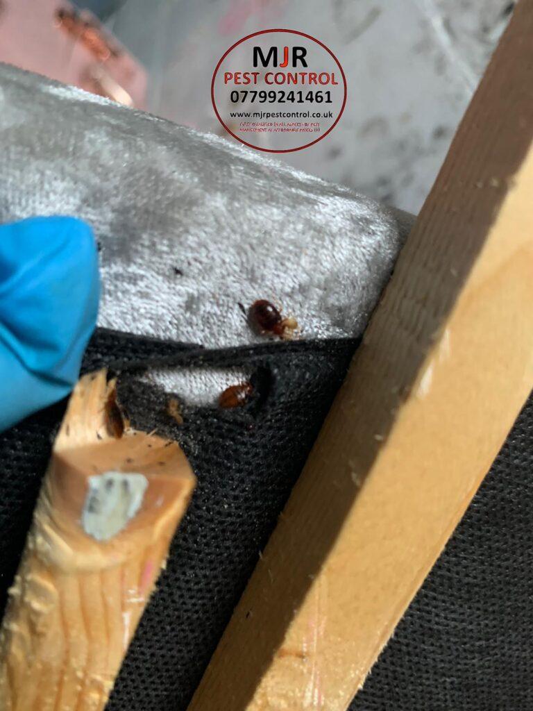 bedbug control leeds