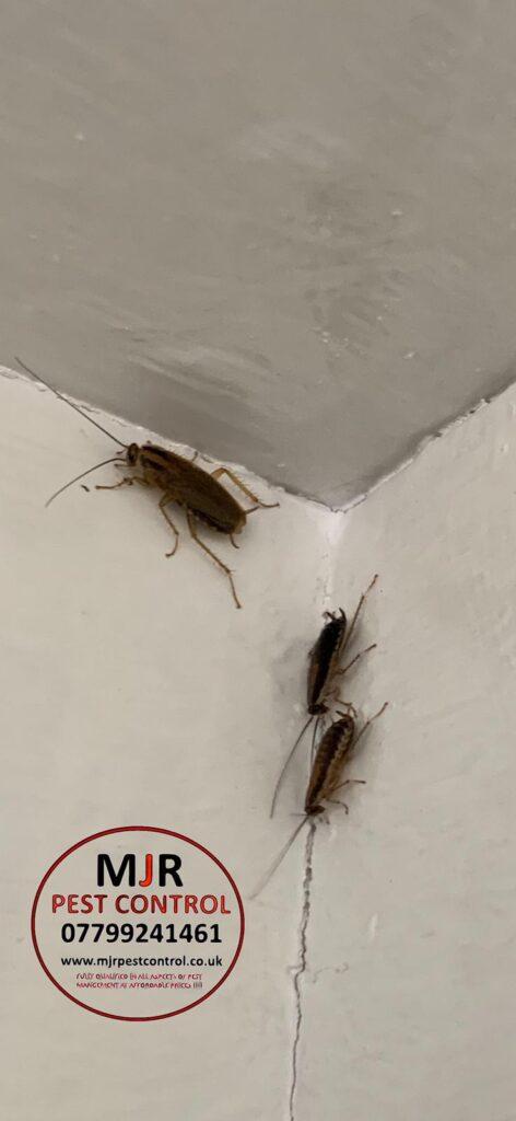 cockroach Control Leeds